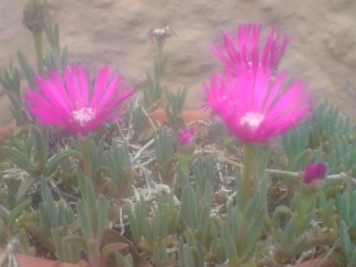 La vie en rose !!! Pour_l10