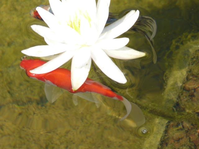 votre photo pour Septembre 2009 - Page 2 P1040510