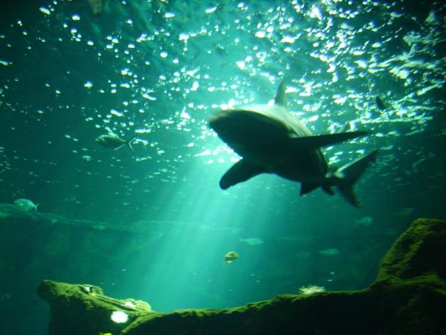 Votre photo pour Novembre 2009 Pict1728
