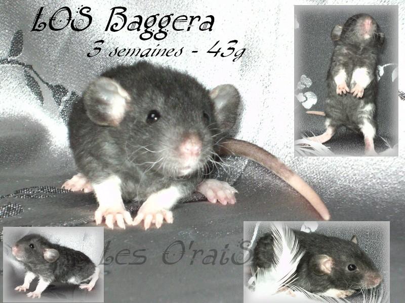 Shimi * Elioth, mink, noir, rex, vari, down under...(67) - Page 3 Bagger12