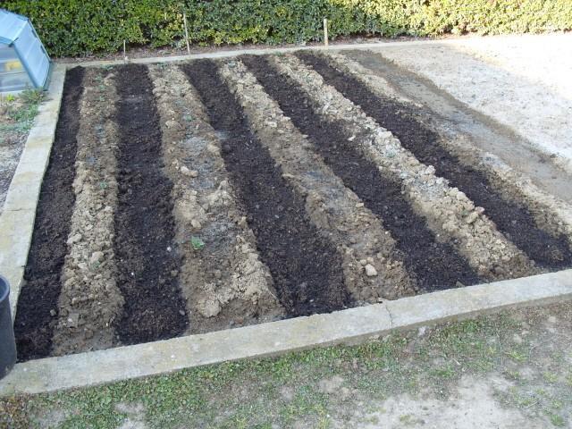 nouvelles plantations de légumes - Page 2 S1050440