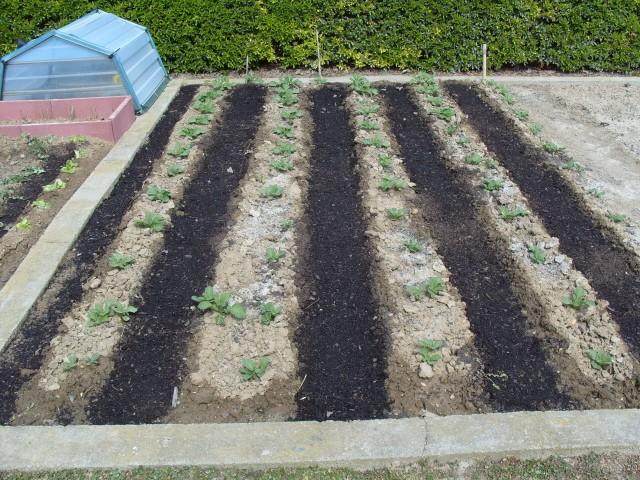 nouvelles plantations de légumes - Page 2 S1050510