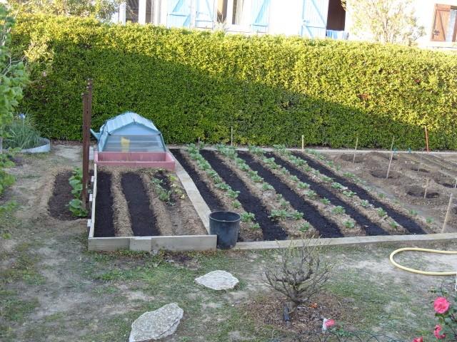 nouvelles plantations de légumes - Page 2 S1050531
