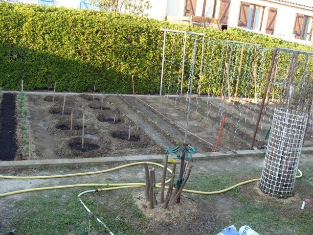 nouvelles plantations de légumes - Page 2 S1050532