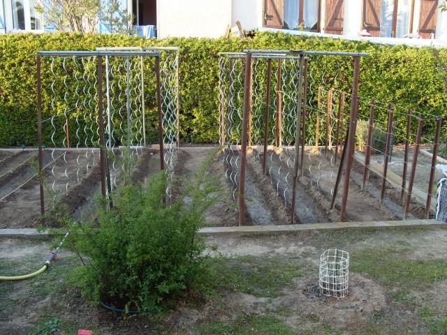 nouvelles plantations de légumes - Page 2 S1050533