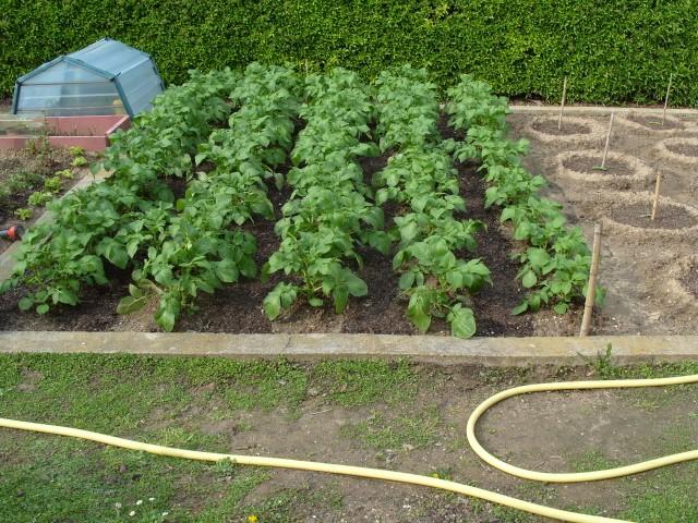 nouvelles plantations de légumes - Page 3 S1050619