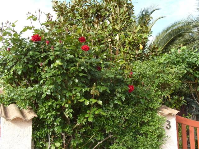 Petit album de roses - Page 3 S1050719