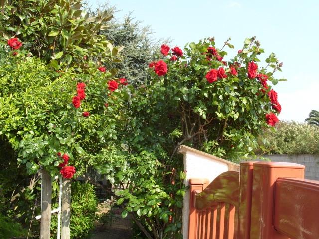 Petit album de roses - Page 3 S1050750