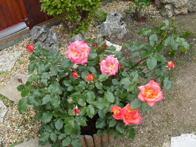 Petit album de roses - Page 3 S1050823