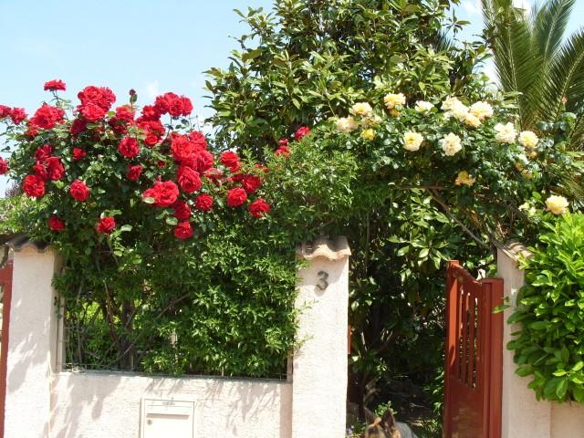 Petit album de roses - Page 4 S1050910