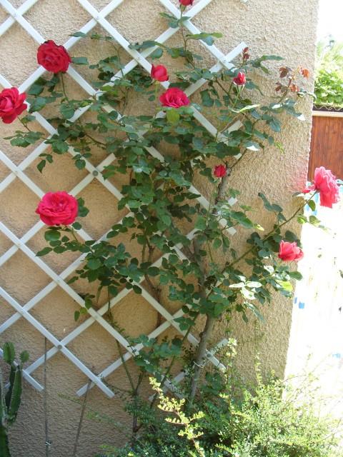 Petit album de roses - Page 4 S1050912