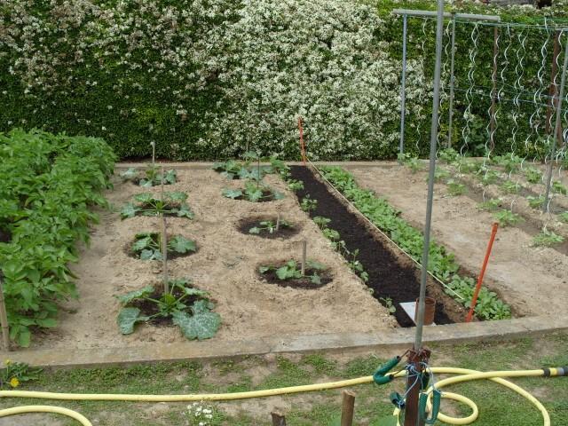 nouvelles plantations de légumes - Page 3 S1050947