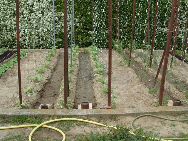 nouvelles plantations de légumes - Page 3 S1050948