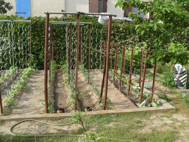 nouvelles plantations de légumes - Page 3 S1050949