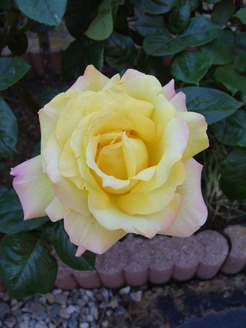 Petit album de roses - Page 4 S1050960