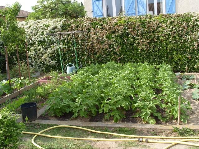 nouvelles plantations de légumes - Page 3 S1051010