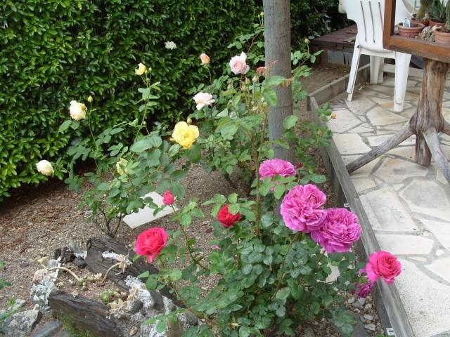 Petit album de roses - Page 4 S1051048
