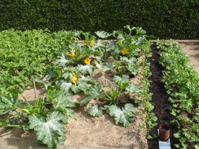 nouvelles plantations de légumes - Page 3 S1051121
