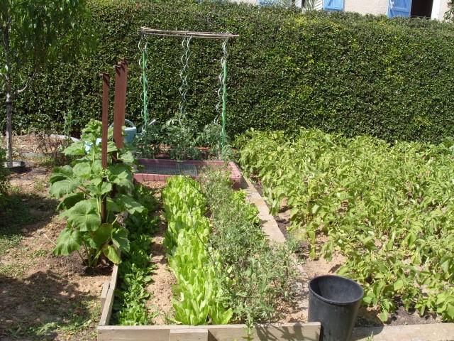 nouvelles plantations de légumes - Page 3 S1051152