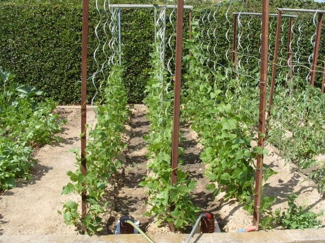 nouvelles plantations de légumes - Page 3 S1051154