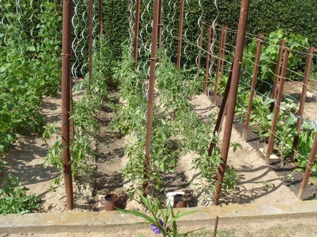 nouvelles plantations de légumes - Page 3 S1051155