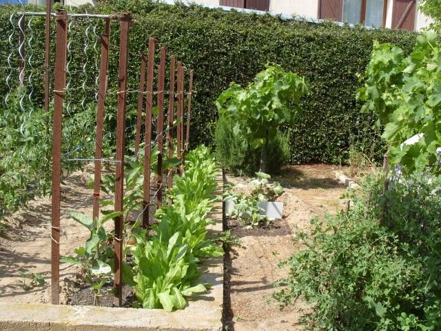 nouvelles plantations de légumes - Page 3 S1051210