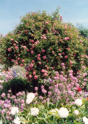 Les jardins de Claude MONET (Giverny) Printg10