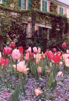 Les jardins de Claude MONET (Giverny) Tulipg10