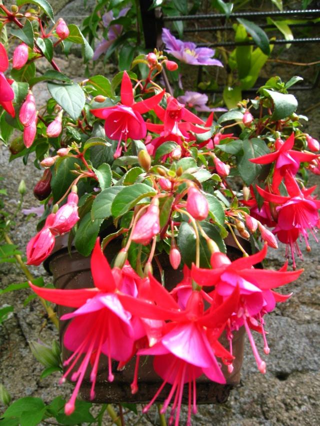 fleurs de marc et mario - Page 10 Img_0069