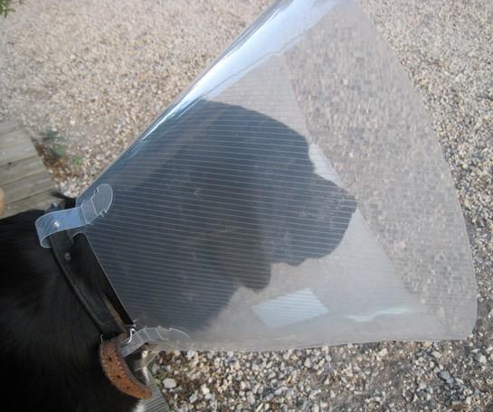 Comment s'est passé la castration de votre chien ? Img_7110