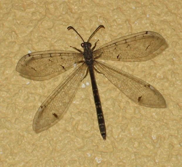 une libellule s'est invitée dans la maison Img_7120