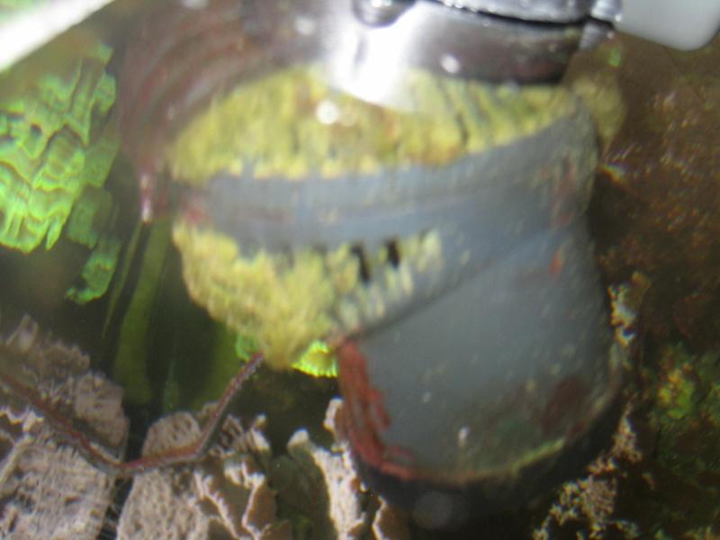 Problèmes d'algues Algues12