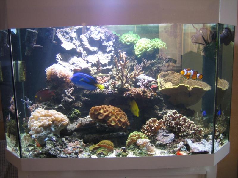 Vend Aquarium 300L tout équipé Algues17