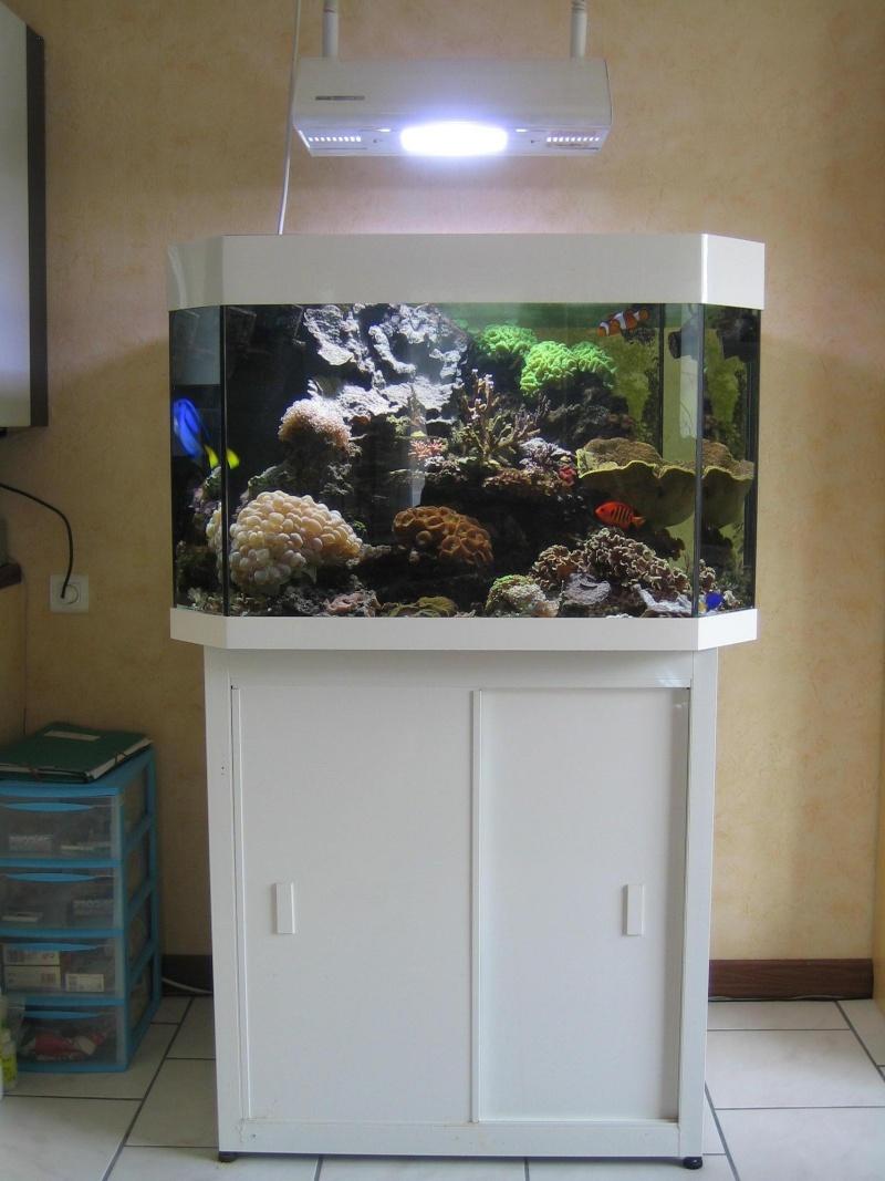 Vend Aquarium 300L tout équipé Algues18