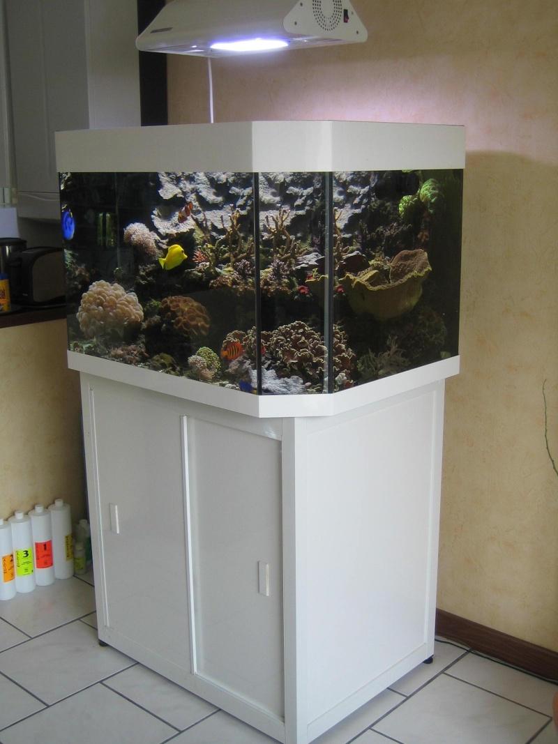 Vend Aquarium 300L tout équipé Algues19