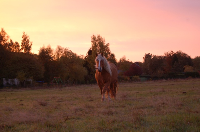 Par un matin de ciel rosé, l'envie de qq clichés... Dsc_9810