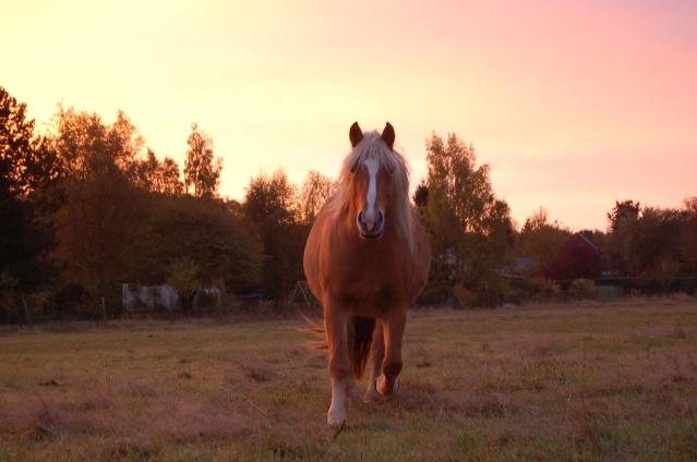 Par un matin de ciel rosé, l'envie de qq clichés... Dsc_9811