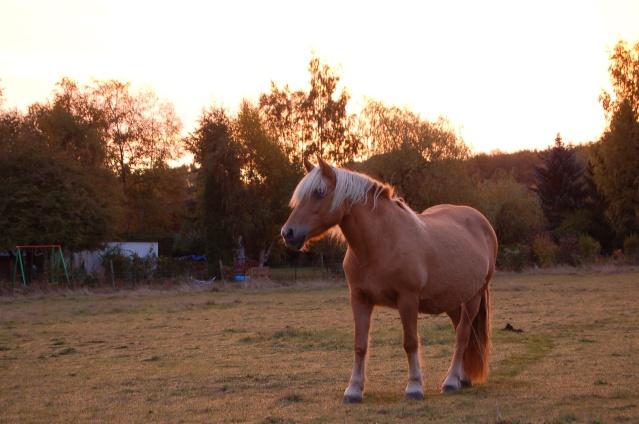 Par un matin de ciel rosé, l'envie de qq clichés... Dsc_9812