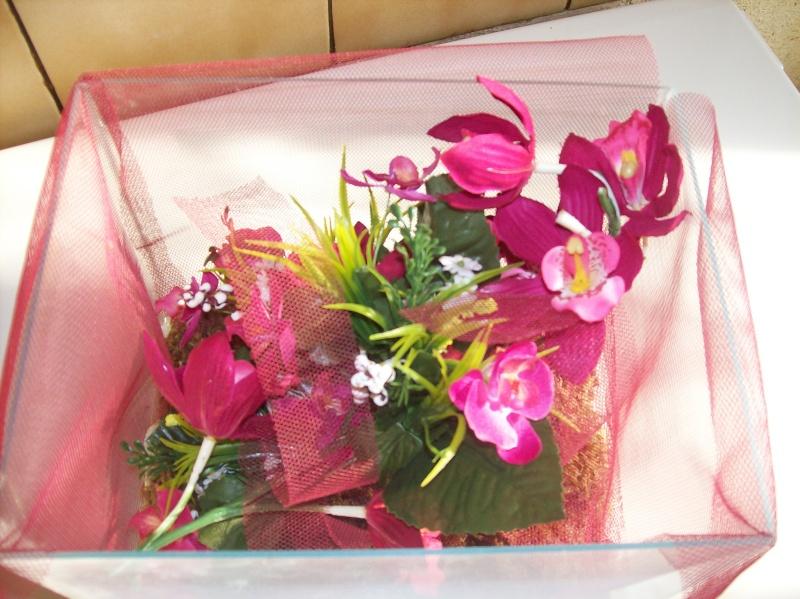 """Suivit de Douce """"mante orchidée"""" 100_6514"""