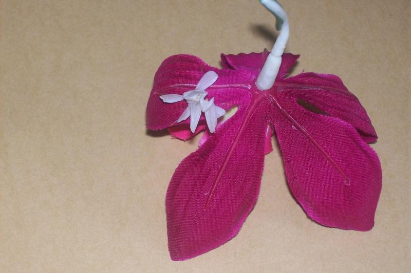 """Suivit de Douce """"mante orchidée"""" 100_6914"""