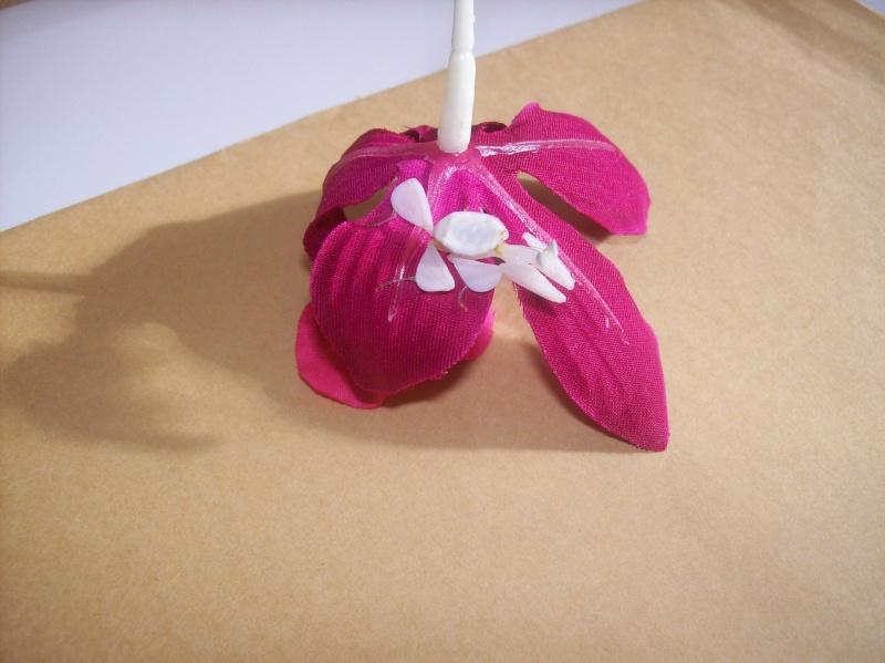 """Suivit de Douce """"mante orchidée"""" 100_6917"""