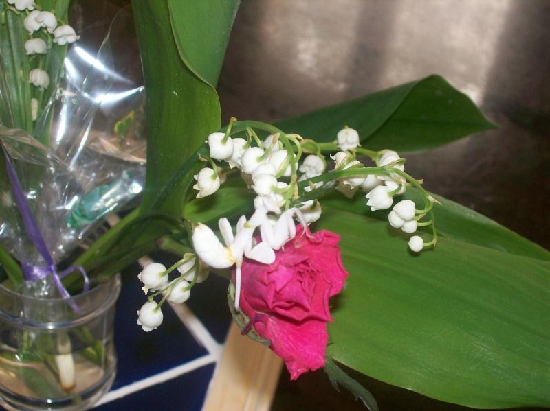 """Suivit de Douce """"mante orchidée"""" 100_7127"""