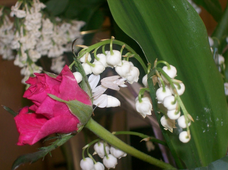 """Suivit de Douce """"mante orchidée"""" 100_7213"""