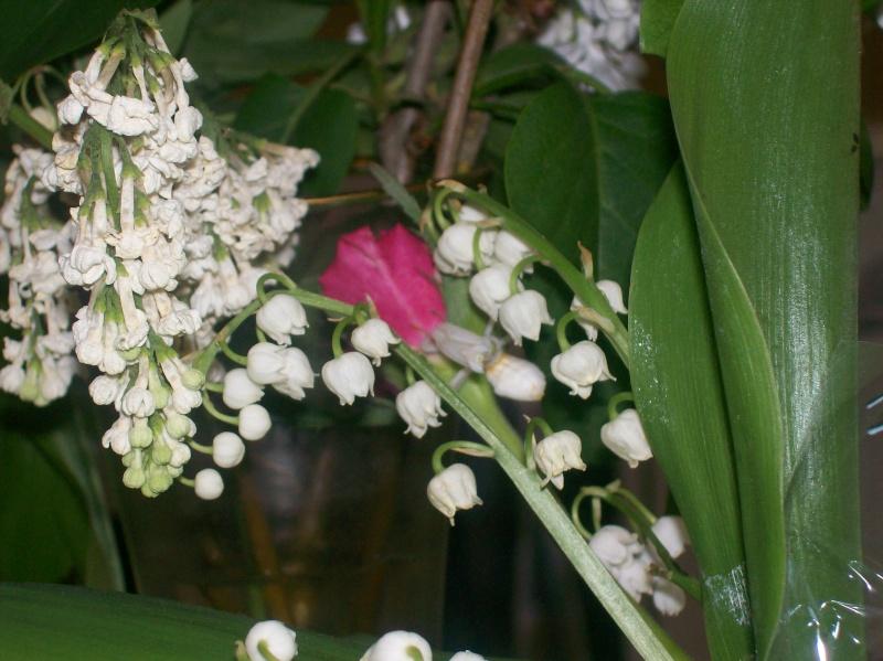 """Suivit de Douce """"mante orchidée"""" 100_7214"""
