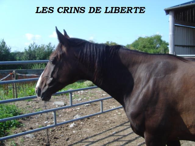 (dept 14) LISA (surnom) trotteur français sauvée par rebecca  (2009) - Page 4 345