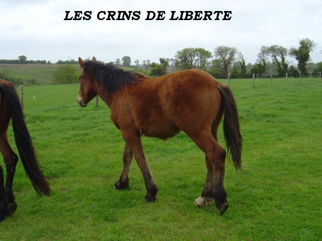 (dept 14) UNTER Cob Normand sauvé par noixdecoco (2009) 3bis15