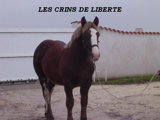 (dept 17) VENEC DES ARDILLIERS Trait Breton sauvé par elodie27!!!!!!!!!!!! (2009) Dsc00527