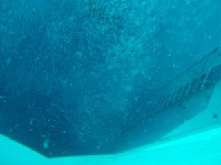 Nemo 33 P2070110