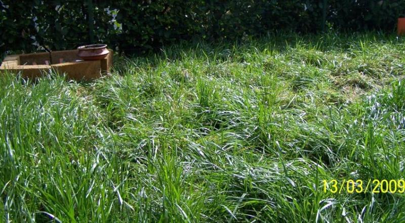 erba del giardino come materiale da nido Giardi10