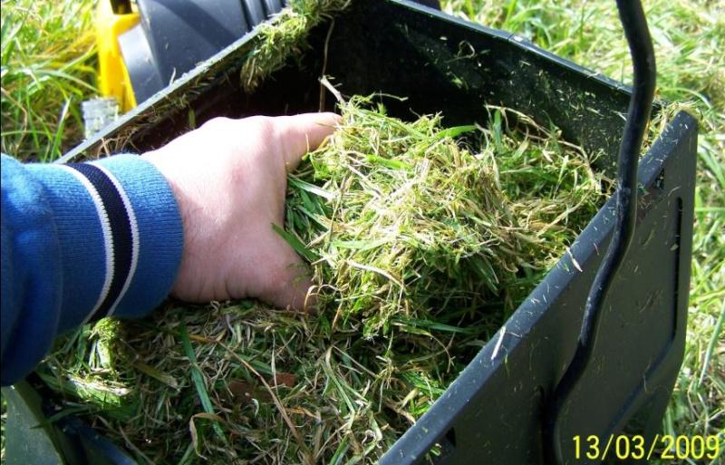 erba del giardino come materiale da nido Giardi12